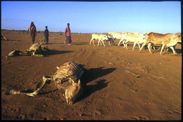 drought-ethiopia-2.jpg